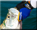 Tarpon fishing with Capt. Bob Brown Marathon