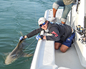 Charters of Key West shark fishing
